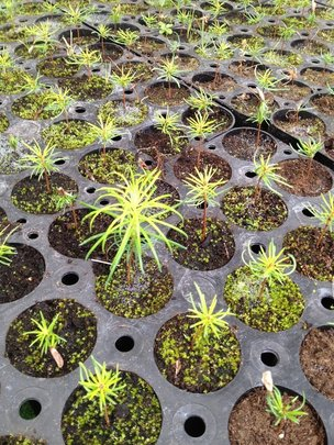 Close-up of the seedlings currently growing