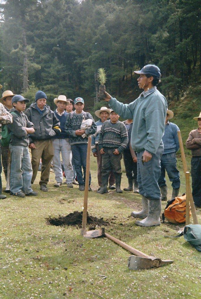 Showcasing reforestation techniques