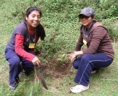 Local students helping in reforestation