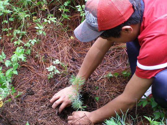 Replanting a tree from the nursery to the forest