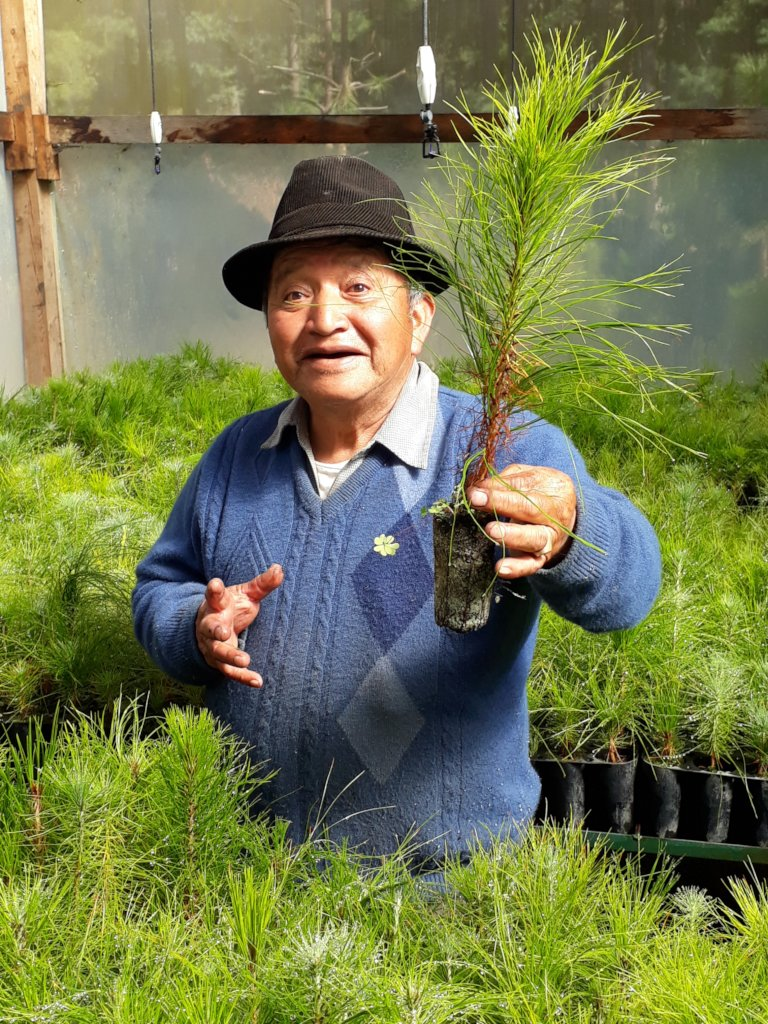 Community-led Reforestation in Totonicapan Forest