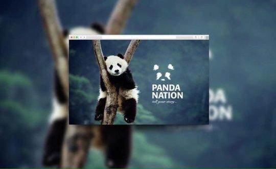 Sahar's branding for Panda Nation