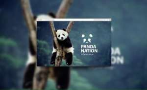 Sahar's branding for Panda Nation