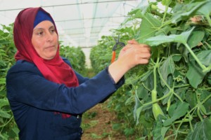 Manar tends vegetables in her