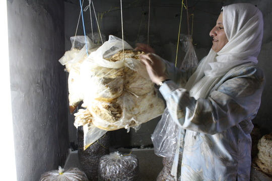 Entrepreneur, Ghada, shows off her mushrooms