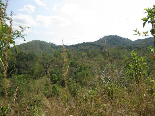 Kanga Forest