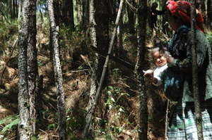 Thinning brings forests back to healthy densities