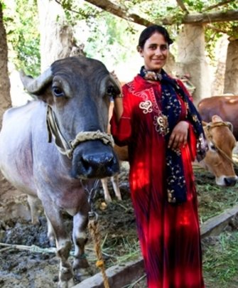 Om Mina and her cow