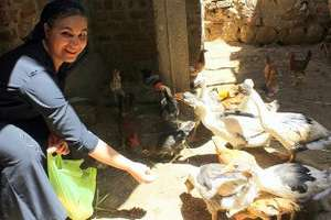 Om Abanoub and her chicken