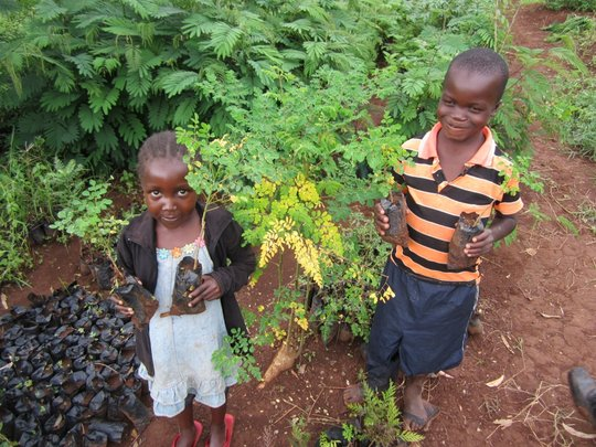 moringa tree nursery with children