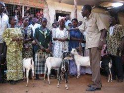 Send a goat