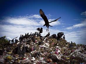 Turkey Vultures of La Chureca, Managua, Nicaragua