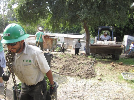Corpsmembers remove dead trees