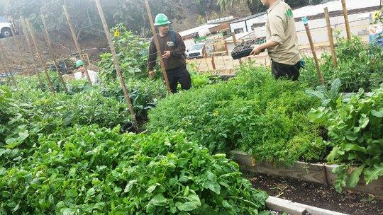Our growing garden