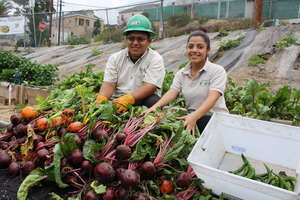 Corpsmembers harvest beets & peppers