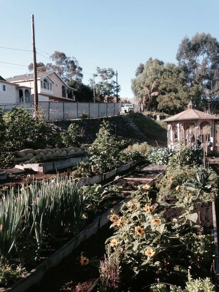 Springtime at the East LA Learning Garden!
