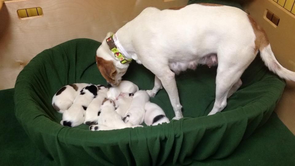 Winnie and her babies