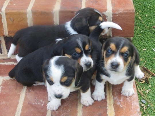 Help Orphan Puppies - Special Needs Dogs in the US