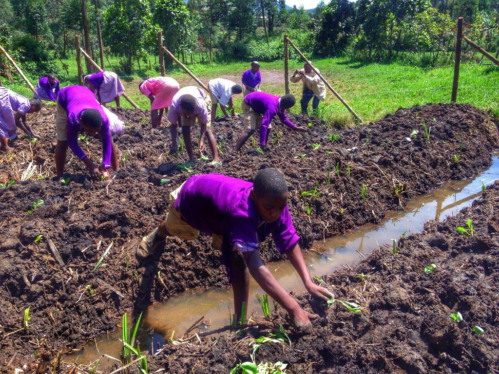 Children engaged in their school garden