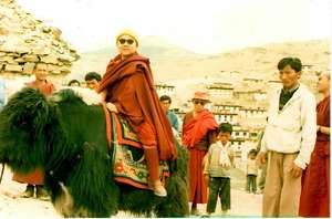 Traveling by yak in Spiti, India