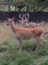 Judith and 'Buck'