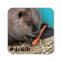 delicious beaver