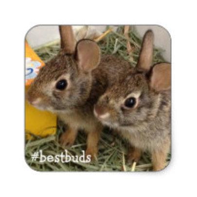 Bestbuds Bunnies