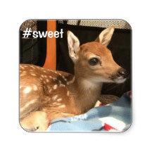 Sweet Fawn