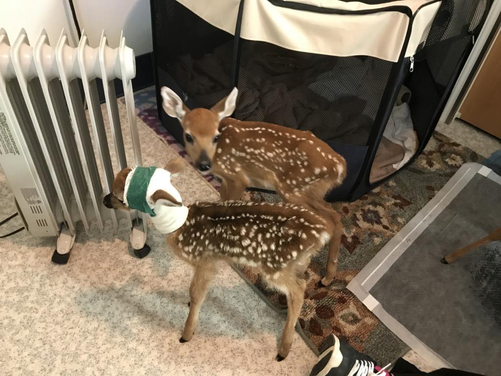 Tiny Tim finds a friend