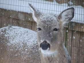 Snowy day Judith