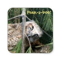 Peek a boo owl