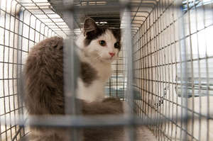 Oscar, our 50,000th cat, after being released