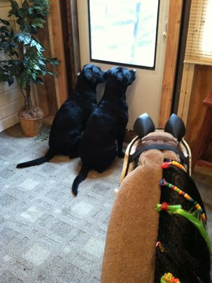 Tank and Blackberry in the therapy room