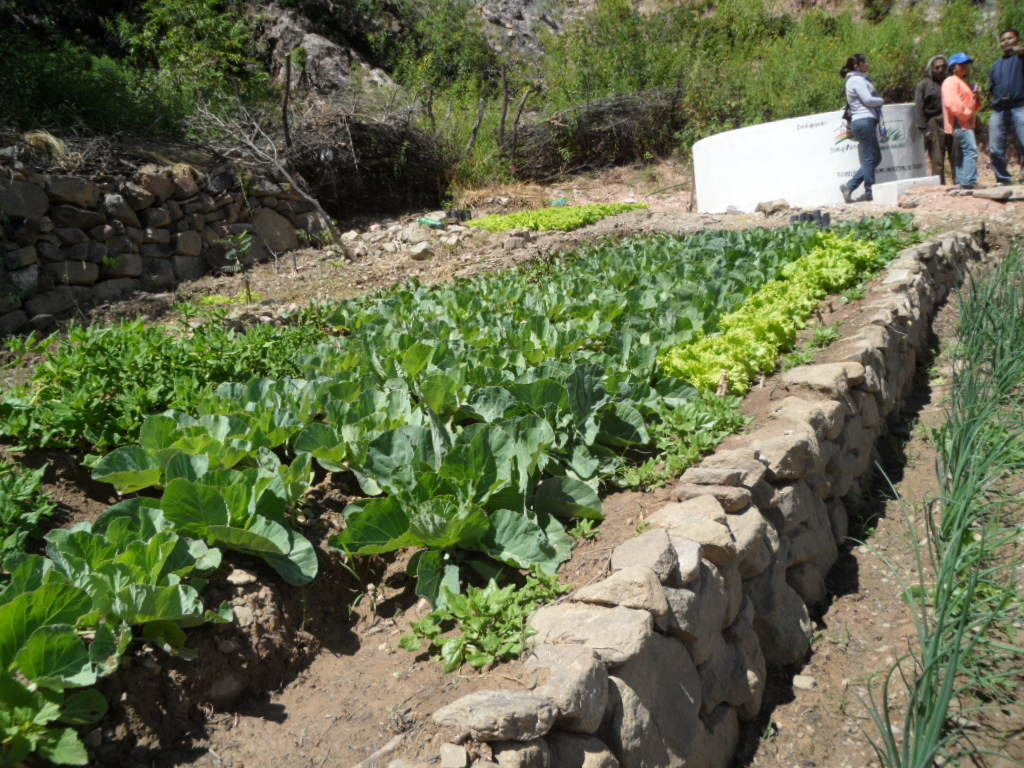 A home garden: an important source of nutrition