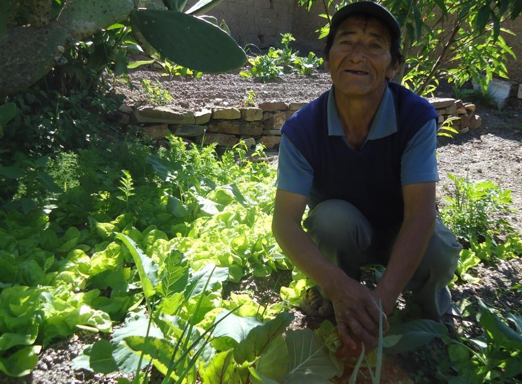 Older farmer tends his new vegetable field