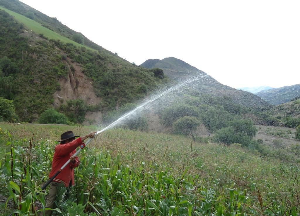 Irrigating crops with harvested rain water