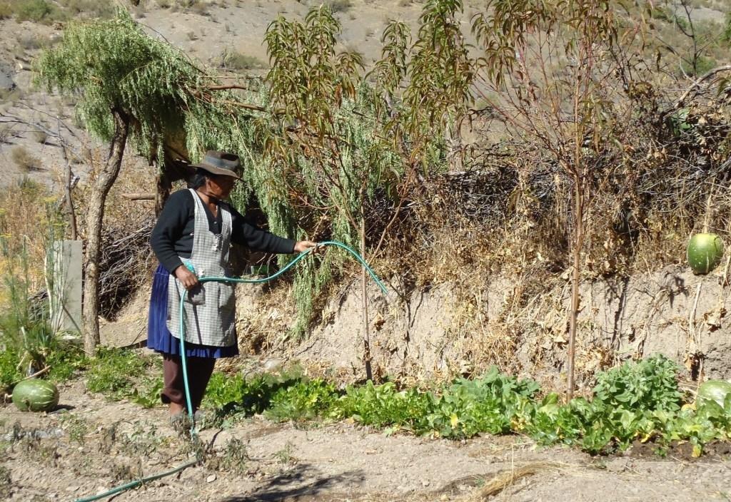 Older woman watering plants