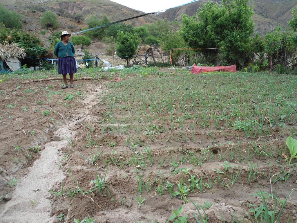 Older woman from Tarabuco in her vegetable garden