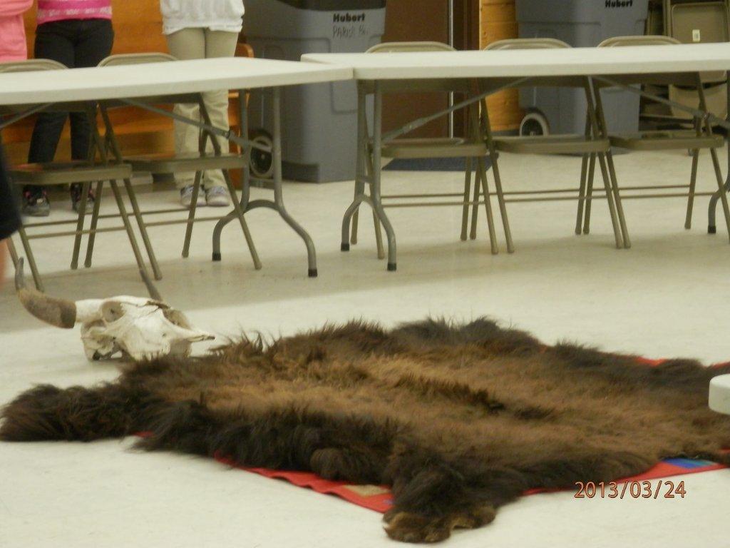 Buffalo Robe Buffalo Skull Preparing