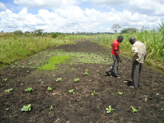 Youth planting their crops