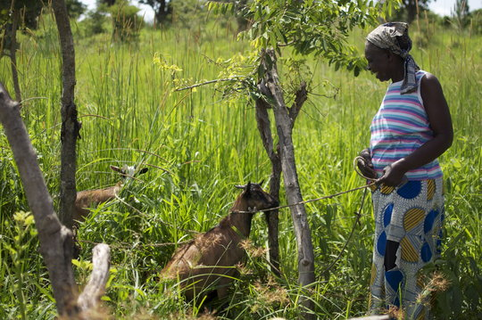 Lucy received goats for livelihood through GWED-G