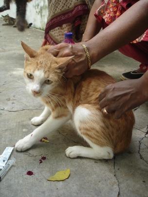 Spay/neuter 1000 cats/dogs in Chennai