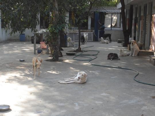Shelter for abandoned dogs