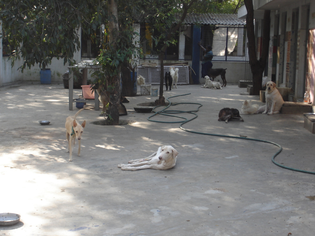 Shelter for abandoned dogs