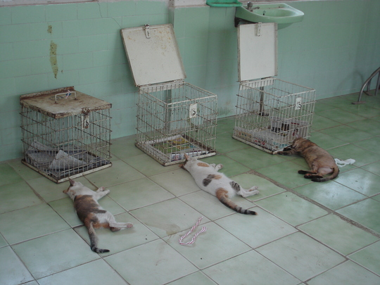 Operated cats