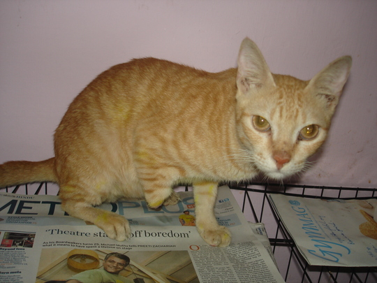 Garfield when he was rescued