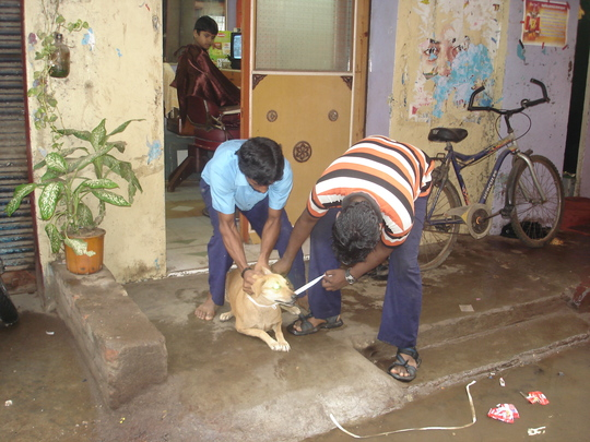 Another street dog being rescued