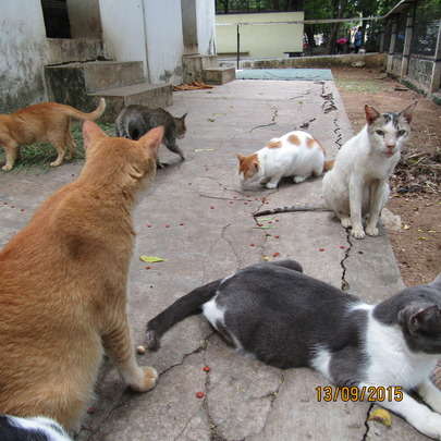 Cats in the shelter