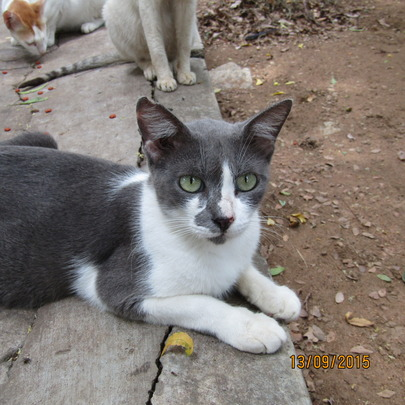 Charcoal - a resident cat