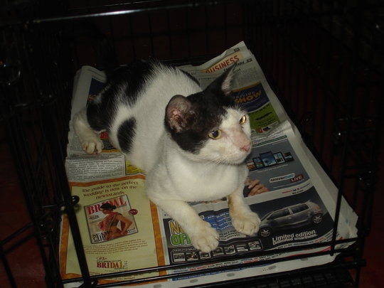 Bindu recuperating in her cage after being spayed